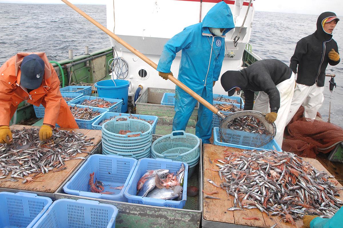 OCEAN BISTRO 旬の食材 旬の食材 アカザエビ 船上での仕分け