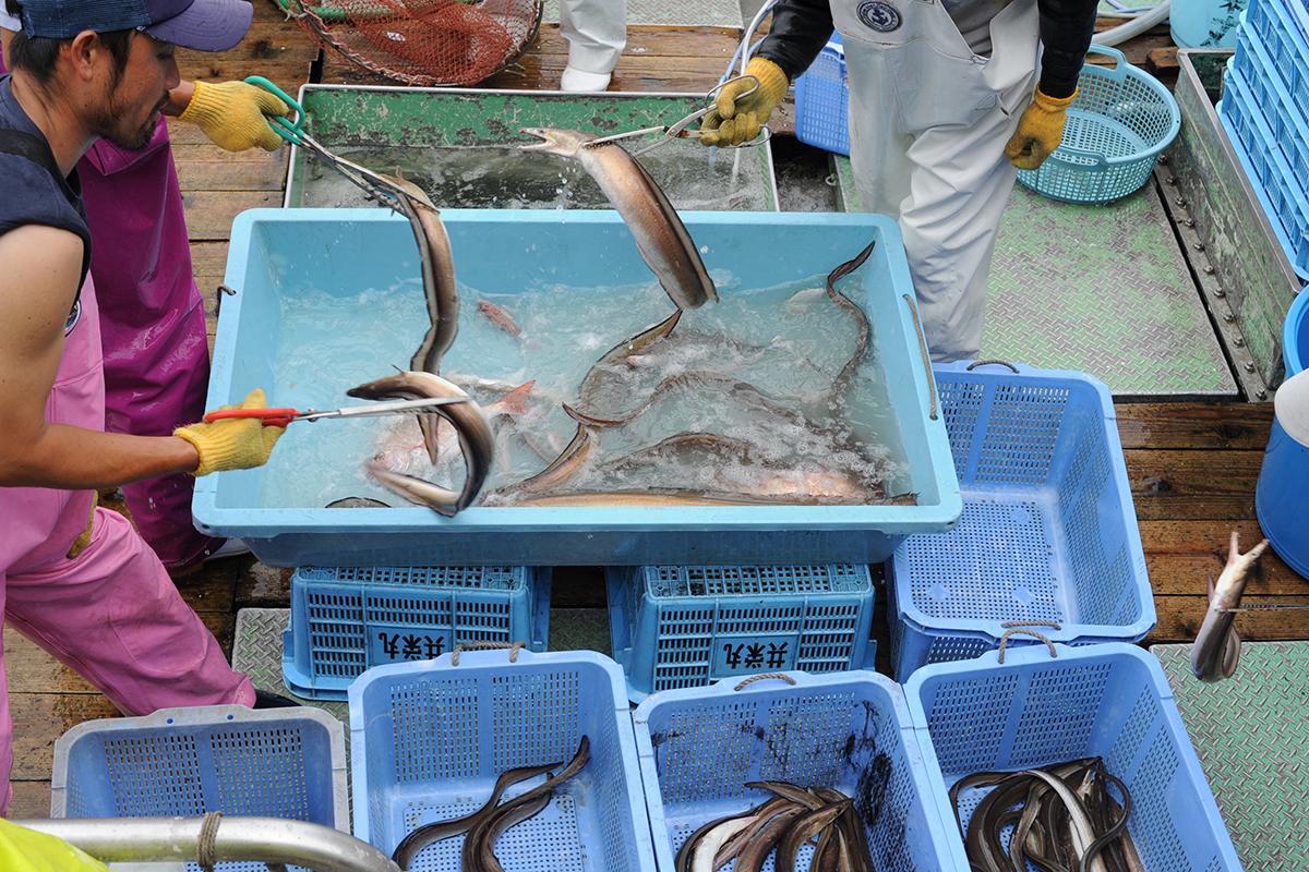 OCEAN BISTRO 旬の食材 舞阪もちかつを もち鰹漁