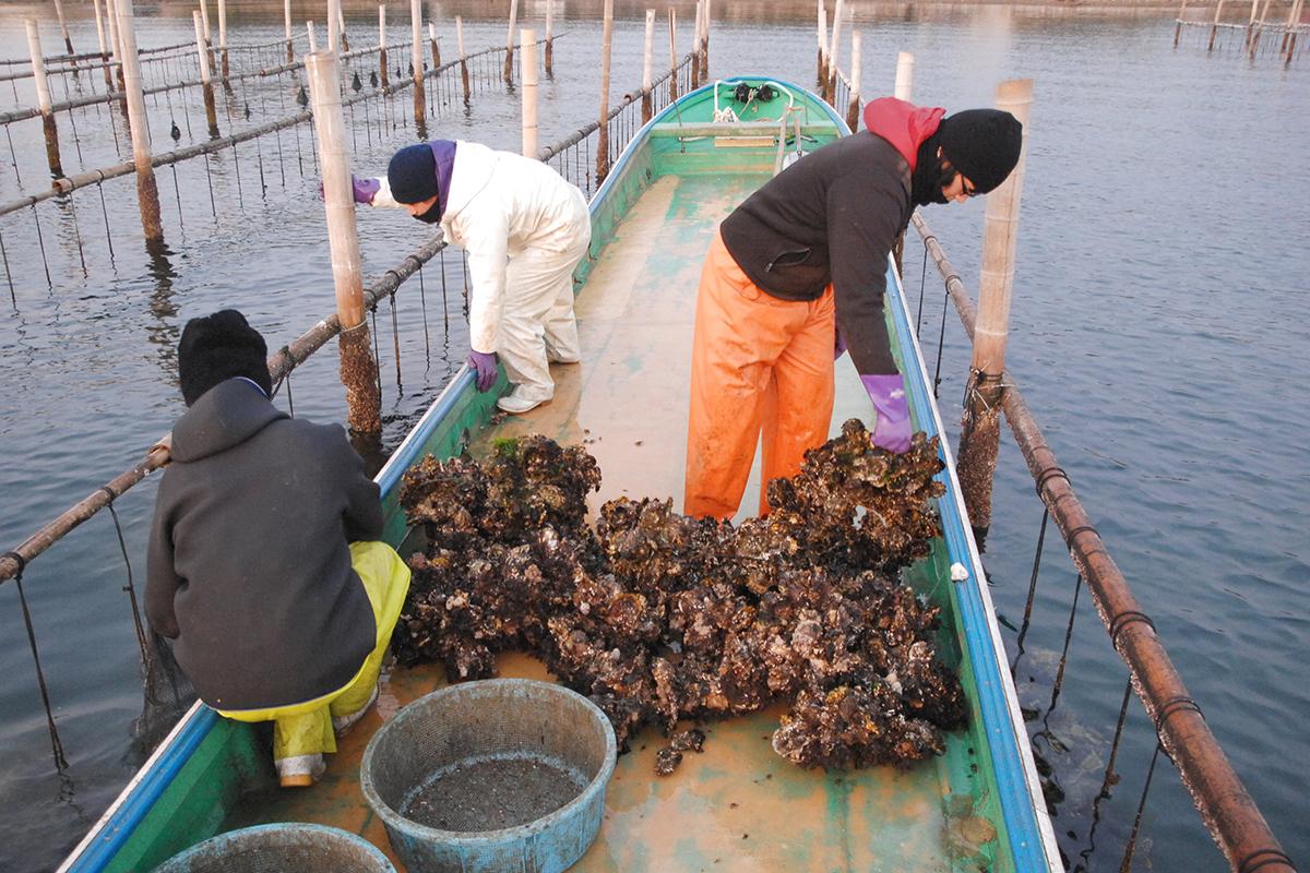 OCEAN BISTRO 旬の食材 牡蠣 水揚げ