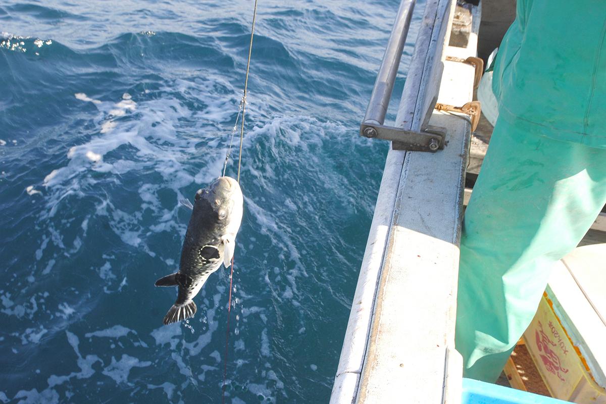 OCEAN BISTRO 旬の食材 とらふぐ 漁