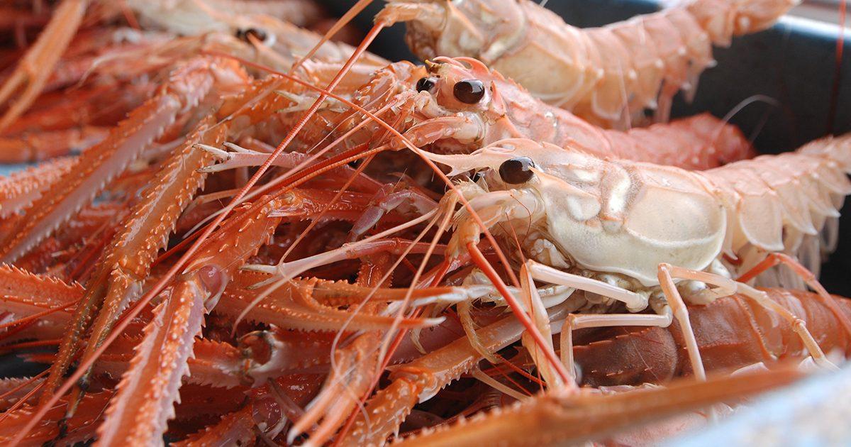 OCEAN BISTRO 旬の食材 アカザエビ